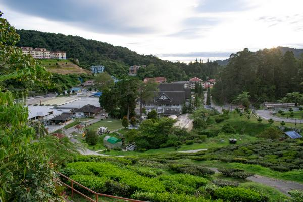 World Travelers - Cameron Highlands - image 40