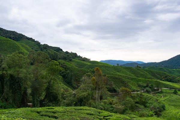 World Travelers - Cameron Highlands - image 53
