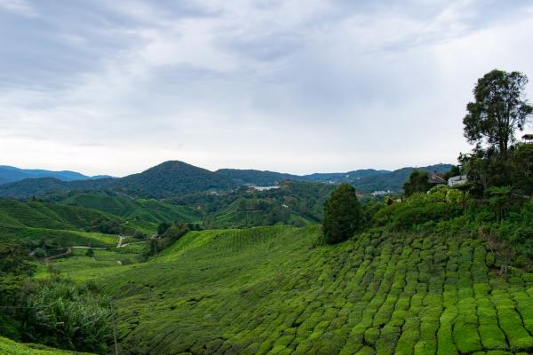 World Travelers - Cameron Highlands - image 50