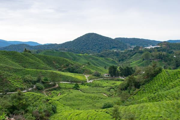 World Travelers - Cameron Highlands - image 52