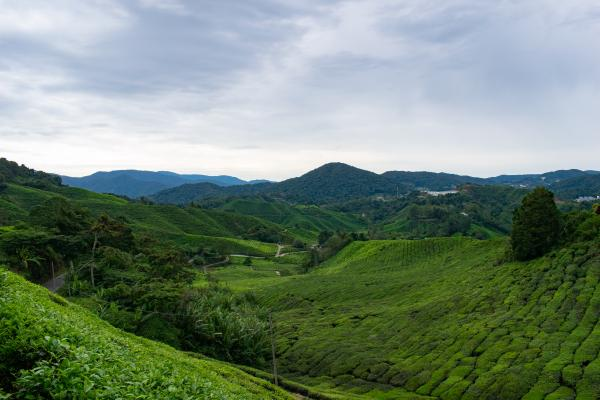 World Travelers - Cameron Highlands - image 48