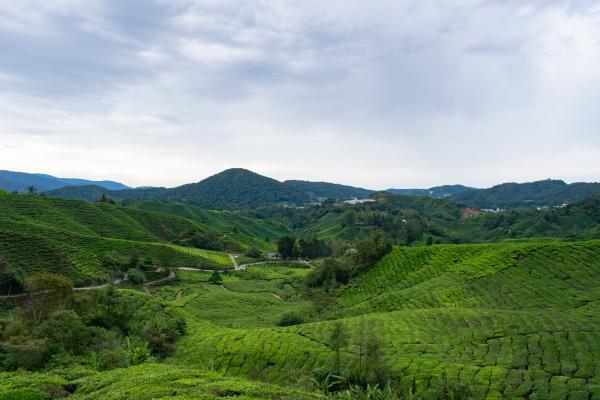 World Travelers - Cameron Highlands - image 55