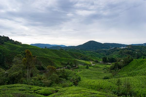 World Travelers - Cameron Highlands - image 54