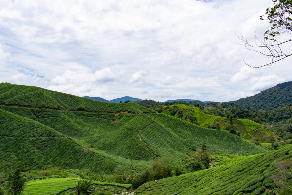 World Travelers - Cameron Highlands - image 92